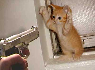 CAT-tastrophes! Cat_burglar